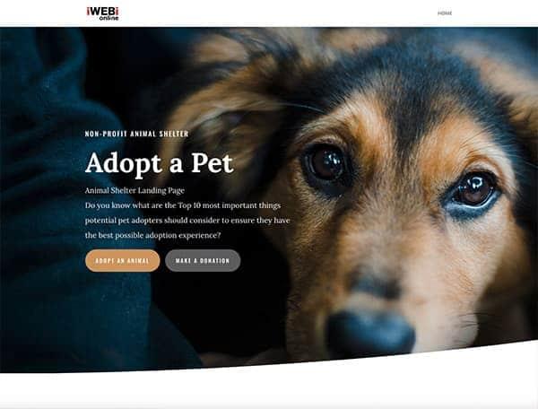 Landing-Page-iwebi.online-exemle-animal